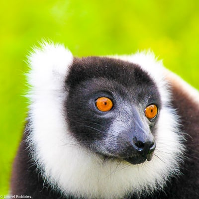 observe lemurs on our Madagascar Tour