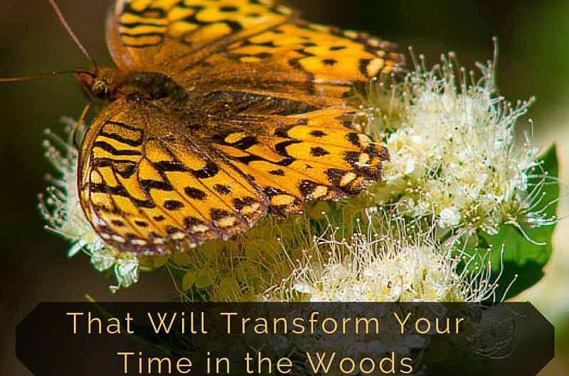 hiking apps that transform your time in the woods