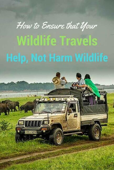 wildlife travel helps wildlife conservation