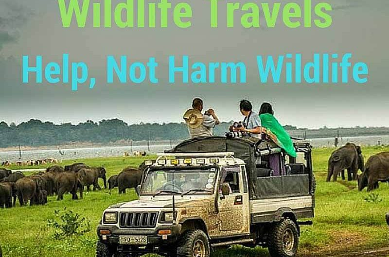 wildlife travel to help contribute to wildlife conservation sq
