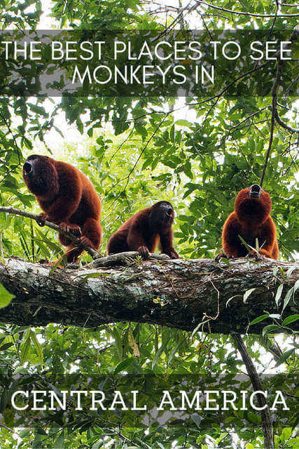 The Best Places to See Monkeys in Central America