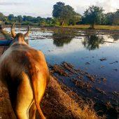 why you should travel to Sri Lanka-6