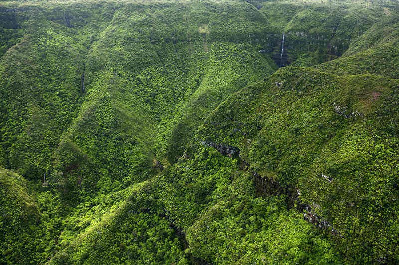 Adventurers and nature lovers will love Black River Gorges National Park in Mauritius