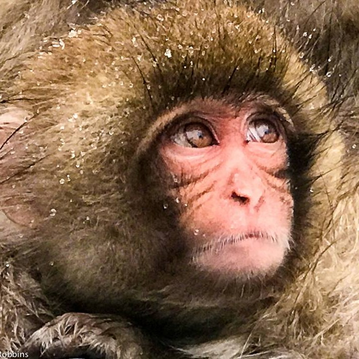 primate stories and monkey pictures