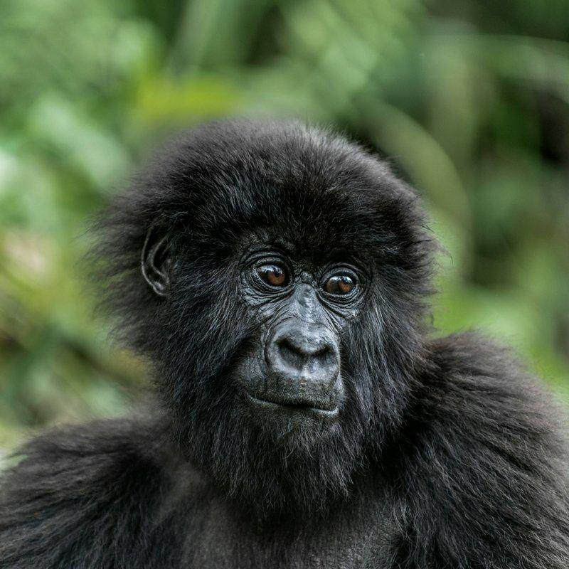 primates tours with a focus on primate conservation