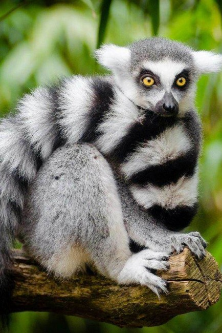you can only see lemurs in Madagascar