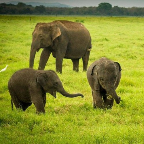 wildlife_tour_of_sri_lanka
