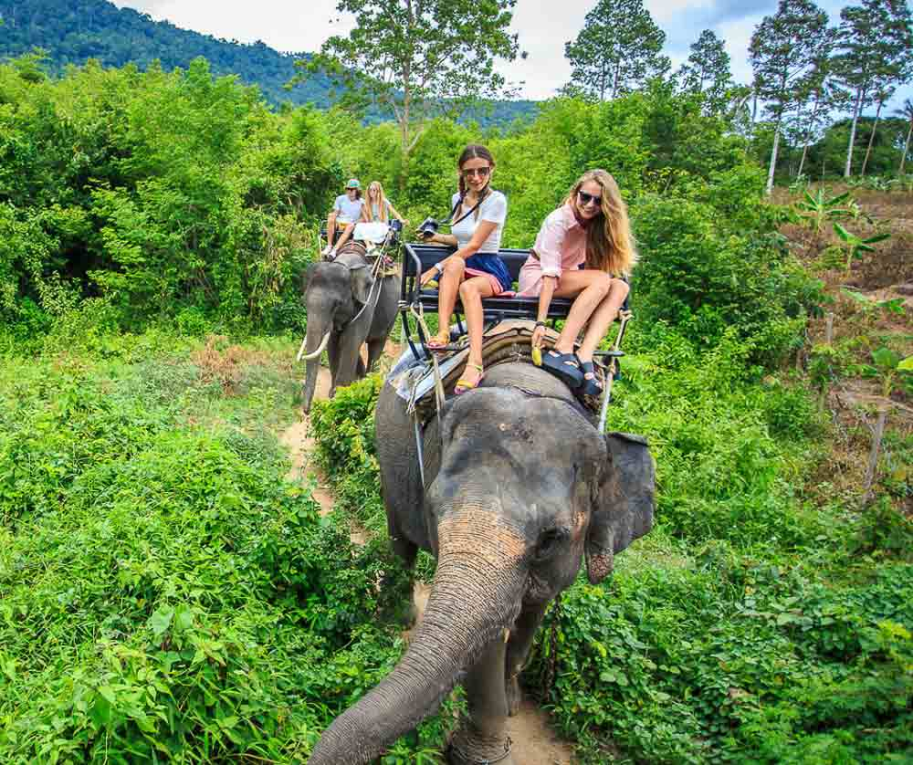 riding elephants is very cruel to the elephants