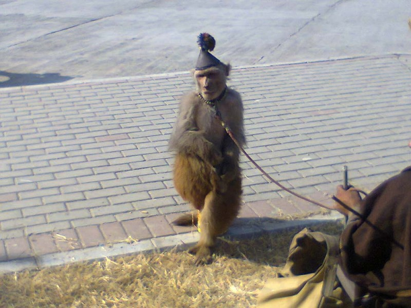 Don't give money for dancing monkeys. This type of animal cruelty is very preventable.