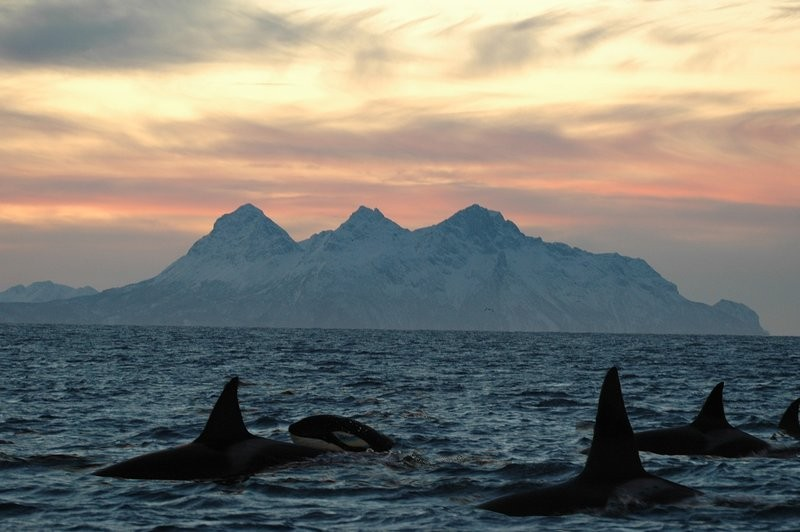 The Inuit believe that Orcas will seek revenge so they don't hunt them.