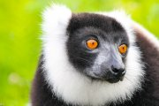 observe endangered lemurs on our Madagascar ecotour