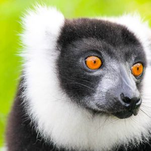 observe endangered lemurs on our Madagascar ecotour
