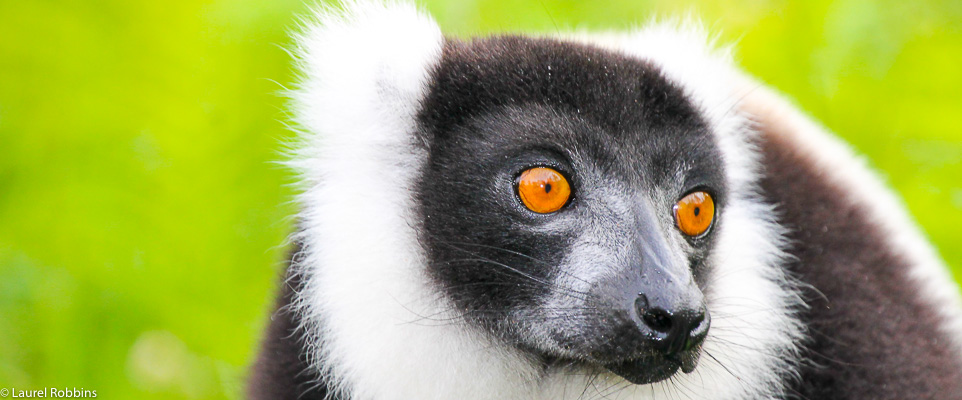 observe lemus in Madagascar on our ecotour