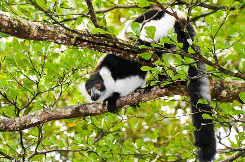 Madagascar travel nature culture