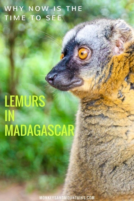 reasons to see lemurs in madagascar