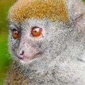 best season to see lemurs in madagascar