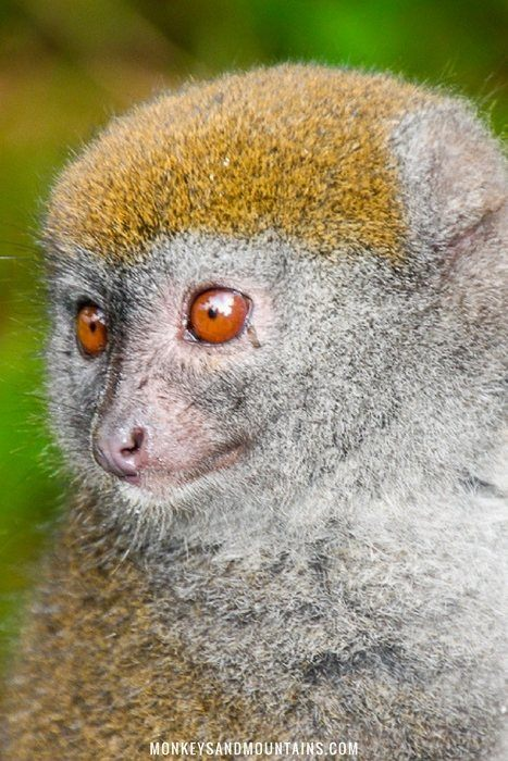 best season to see lemurs in madagascar