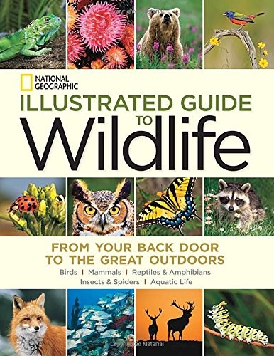 Alimal lovers will love a Illustrated Guide to Wildlife