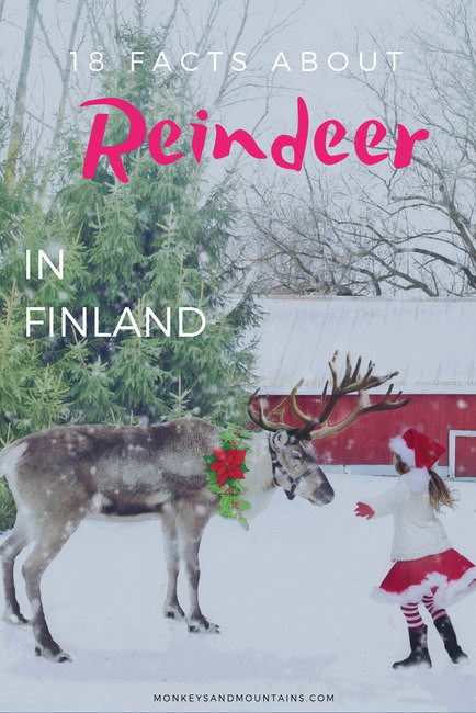 Reindeer 18 Facts To Impress Your Holiday Guests