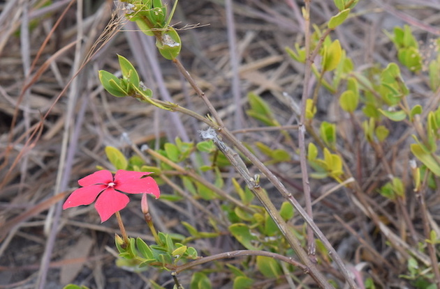 Madagascar plants are used for medicinal treatments including cancer treatments.