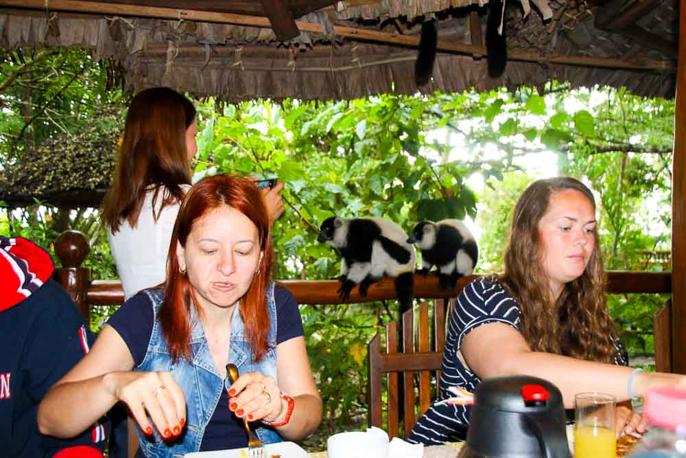breakfast with lemurs in Madagascar