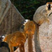 Madagascar travel nature culture-122