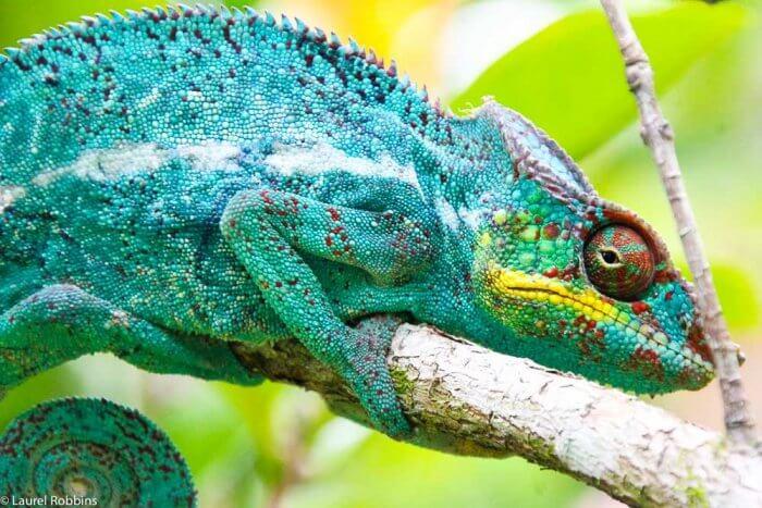 Madagascar travel nature culture-13