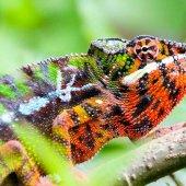 Madagascar travel nature culture-21