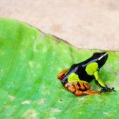 Madagascar travel nature culture-28
