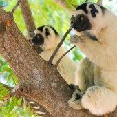 Madagascar travel see lemurs-58