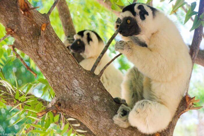 Wildlife Tour to Madagascar