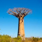 Madagascar travel see lemurs-7