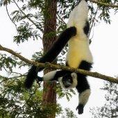 Madagascar travel to see lemurs-20