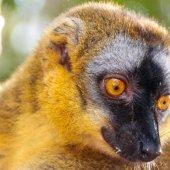 Madagascar travel to see lemurs-43