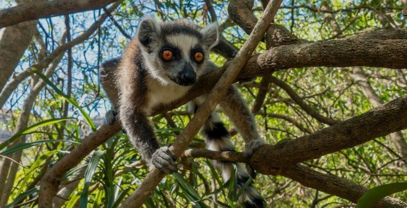 ecotour to Madagascar