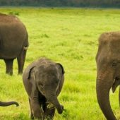 custom tours to Sri Lanka