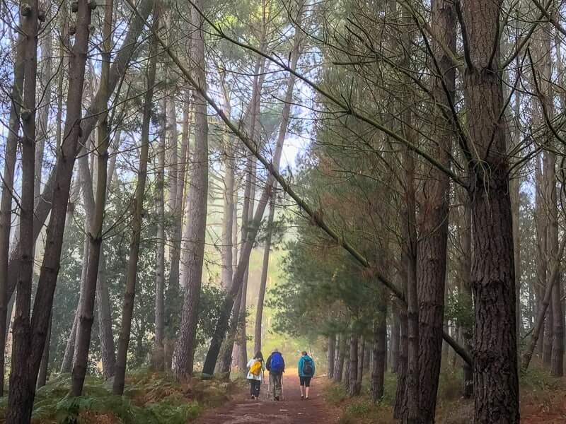 forest walk on the Camino de Santiago