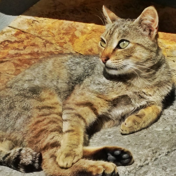 One of the many cats seen in the fishing village of Cudillero.