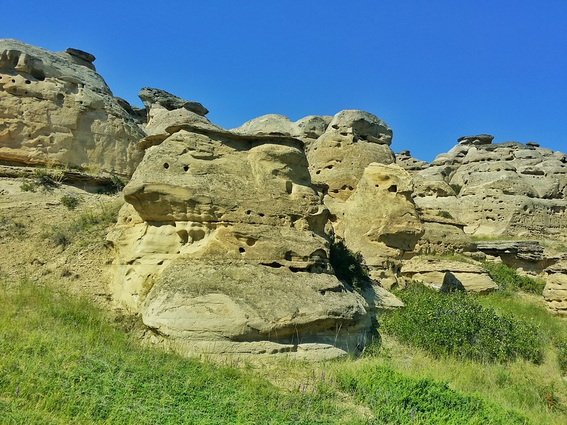 Over 160 bird species can be found in Writing-On-Stone and many make their nests in the Hoodoos.