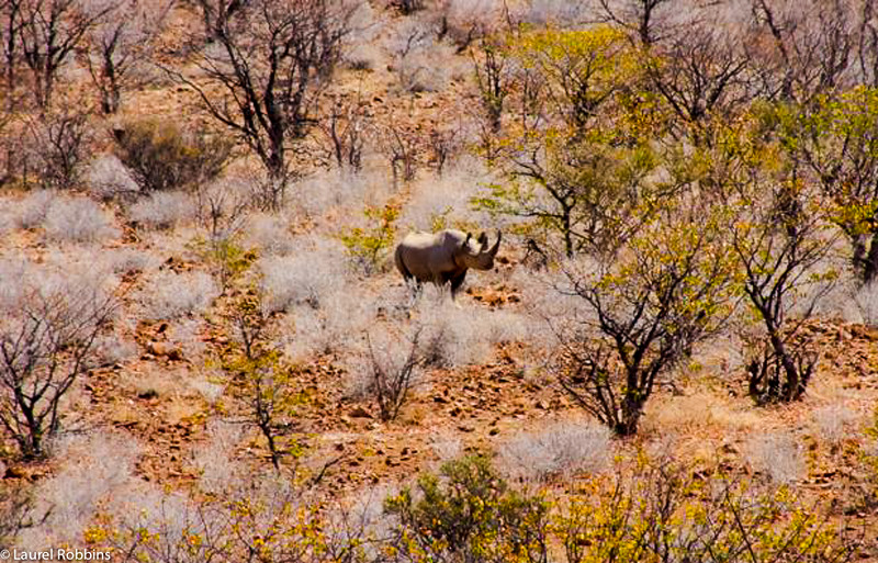 Namibia is one of only a few places on earth where you can see black rhinos.