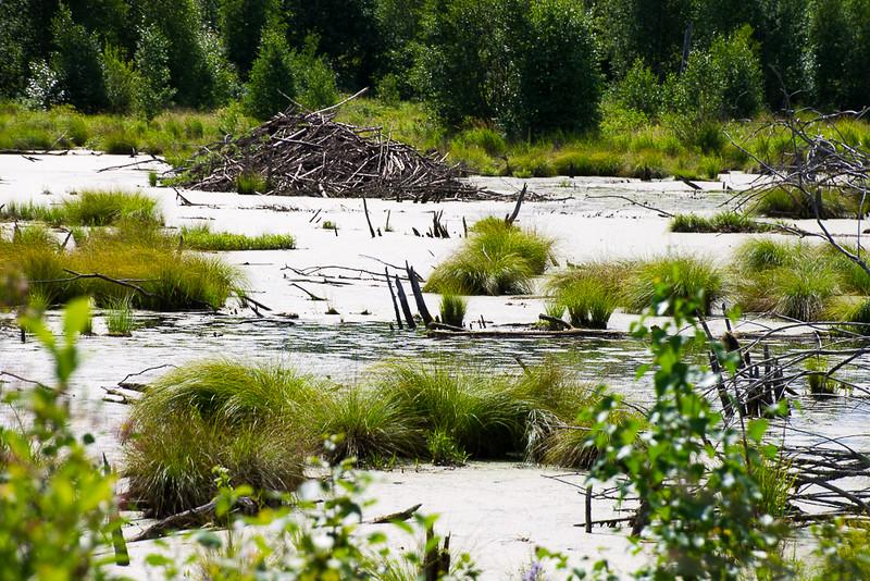 Beaver Dam in Elk Island.