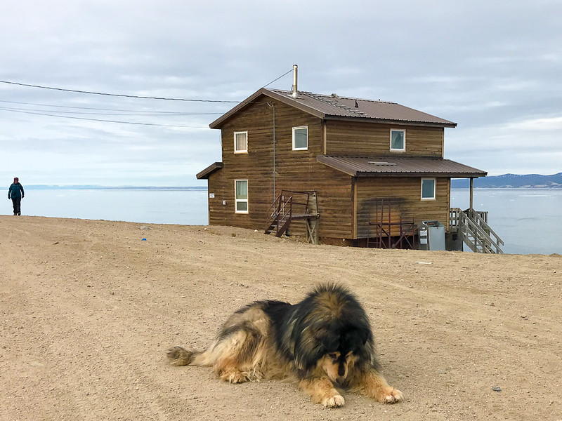Dog resting comfortably on a street in the Pond Inlet, Nunavut.