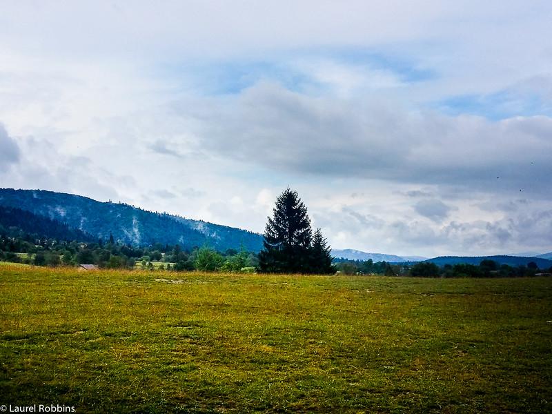Meadows meet the Carpathian mountains in Ukraine.