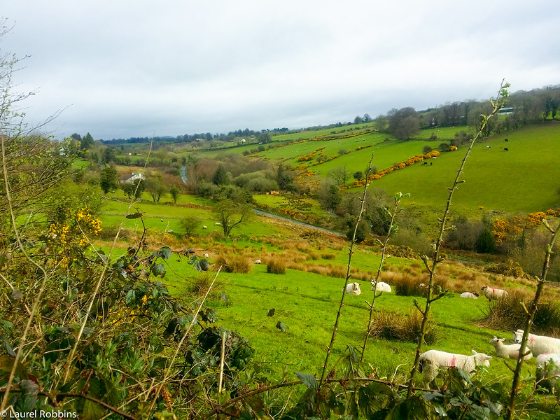 Wicklow Way between Shillelagh and Moyne, Ireland