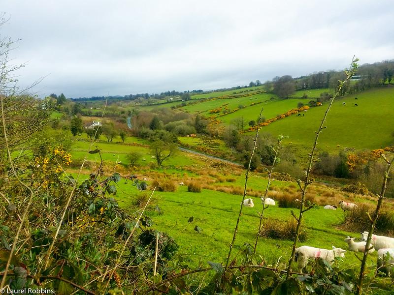 Wicklow Way between Shillelagh and Moyne, Ireland