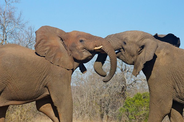 Hluhluwe Game Park - elephants