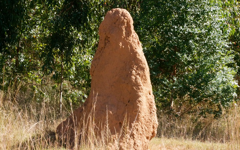 south african wildlife termite mound
