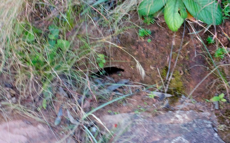 Cobra hole in South African wildlife, South Africa
