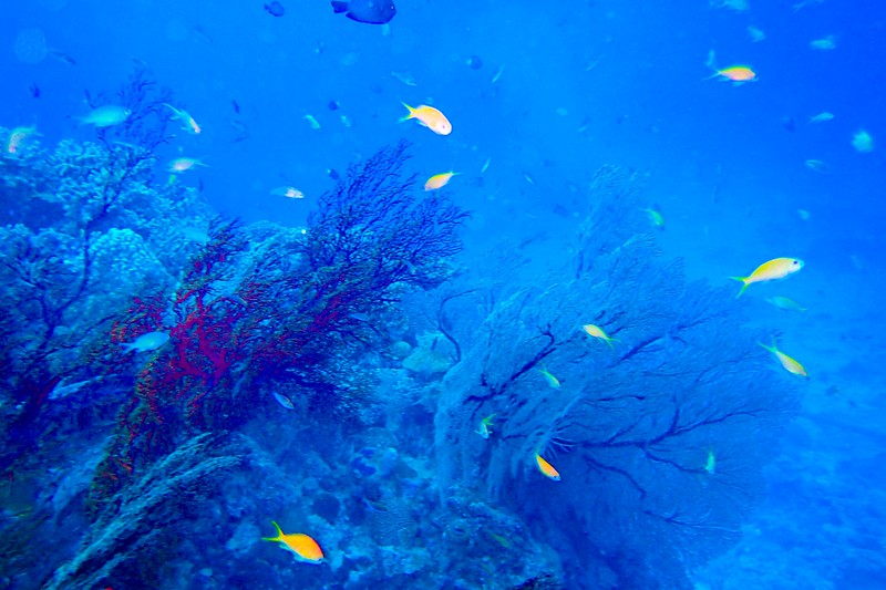 Coral reefs surround each of the islands in Okinawa, making it a diver's paradise.