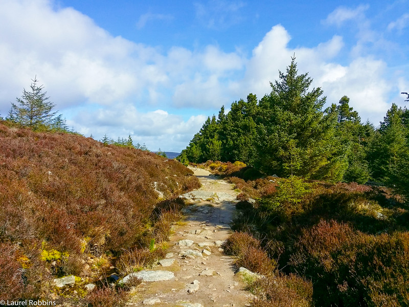 The Wicklow Way between Enniskerry and Marlay Park, Dublin